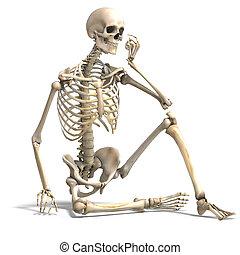 skeleton., korektní, výstřižek, nad, anatomický, překlad, cesta, běloba mu, stín, 3