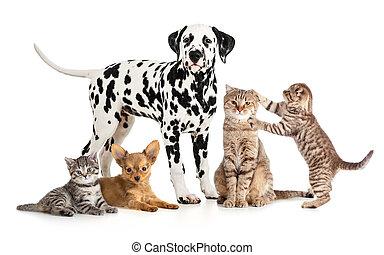 skupina, koláž, zvěrolékař, osamocený, petshop, muchlat se, živočichy, nebo