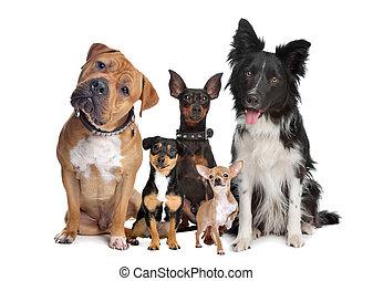 Skupina pěti psů