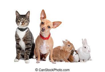Skupiny zvířat