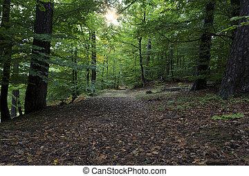 """slavný, německo, forest"""", """"palatinate"""