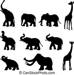 Sloni, mami, žirafa