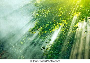 Sluneční mlha