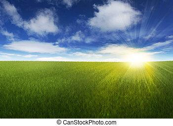 Sluneční obloha nad polem