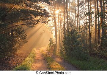 sluneční paprsky, les