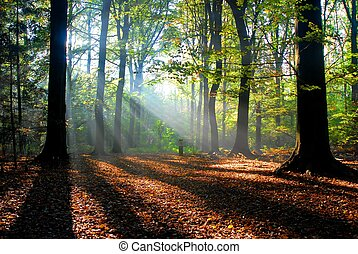 Sluneční paprsky se nalétají do podzimního lesa