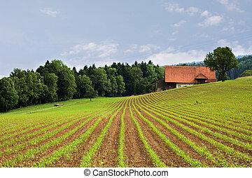 snímek, zemědělství