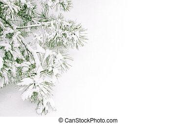 Sněhová větev