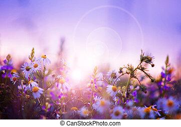 Spring květinové pole