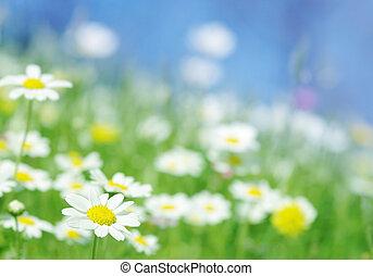 Spring květiny