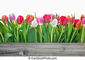 Spring tulipánové květiny