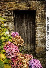 Staré dřevěné dveře a hortenzie