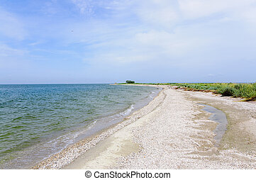 starodávný, pláž, shelly