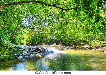 Stream v lese