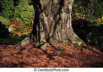 strom, buk, list, podzim
