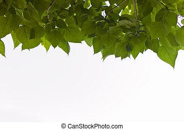 strom, listoví