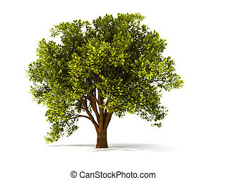 strom, summerl, 3