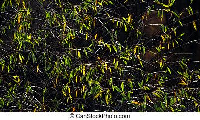 strom, thinning, autumn., list