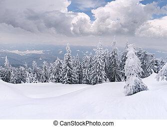 Stromy pokryté hromadou a sněhem v horách