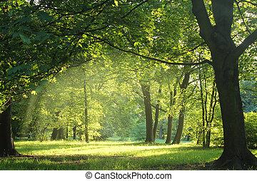 Stromy v letním lese