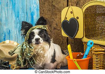 summer prázdniny, pes, komický