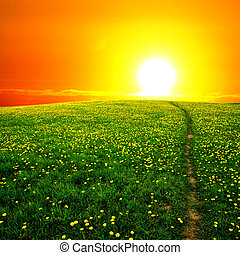 Sunrise na Dandelionském poli