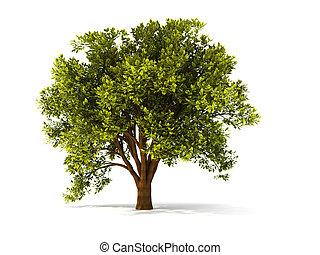 Třetí letní strom
