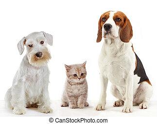Tři domácí zvířata a psi