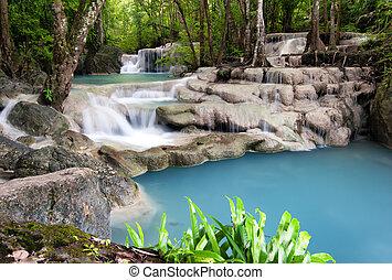 Thajsko-dveřní fotografie z vodního lesa v lese.