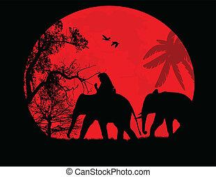 thajsko, nad, západ slunce, slon