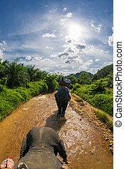 thajsko, safari, slon