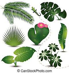 Tropická sbírka listů