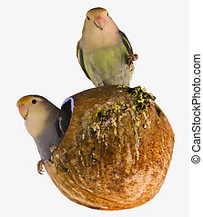 ubytovat se, hnízdo, ptáček