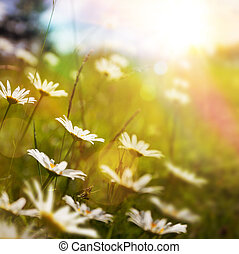 Umělá abstraktní příroda s letní květinou v trávě