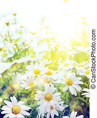 Umělé letní květiny, přírodní prostředí