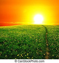 východ slunce, pampeliška, bojiště