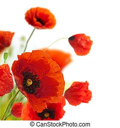 výzdoba, -, květiny, mák, květinový, kout, hraničit, design