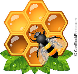 včela, plástev medu