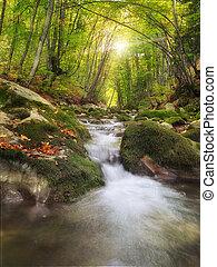 V lese je řeka.