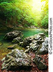 V lese je řeka