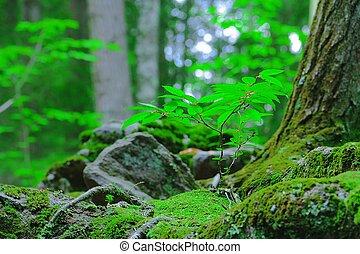 V lese rostla žížalka