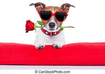 Valentýnský pes