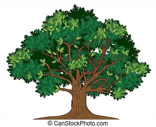 Vektor dubový strom