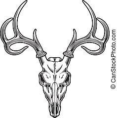vektor, jelen, lebka