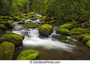 Velké hory, národní parky, lesy, lesy