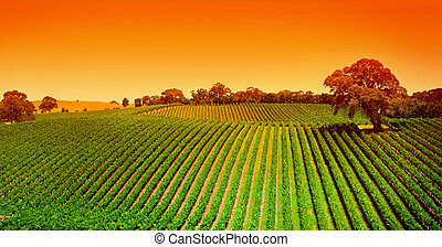 Vineyard Hills východ slunce