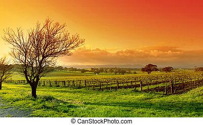 Vineyardová krajina