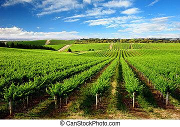 vinice, strom, kopec, jeden