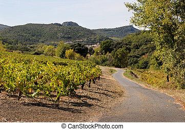 vinice, země cesta