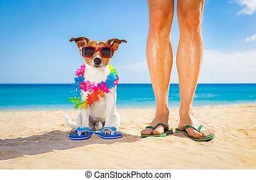 vlastník, prázdniny, pes, léto